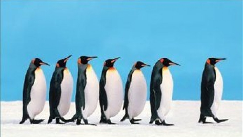 leadership-penguins